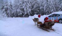 Arctic Lapland Rally 2016 - The Reindeer Power... !